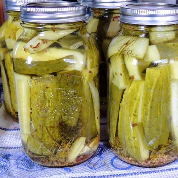 Garlicky Double Dill Pickles |My Edible Journey