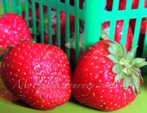 Strawberries | My Edible Journey